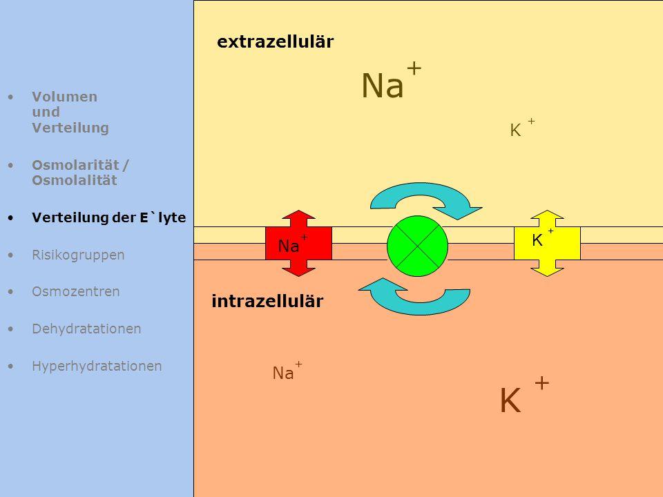 Na+ K + extrazellulär K + K + Na+ intrazellulär Na+