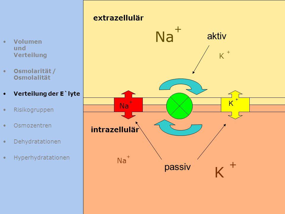 Na+ K + aktiv passiv extrazellulär K + K + Na+ intrazellulär Na+