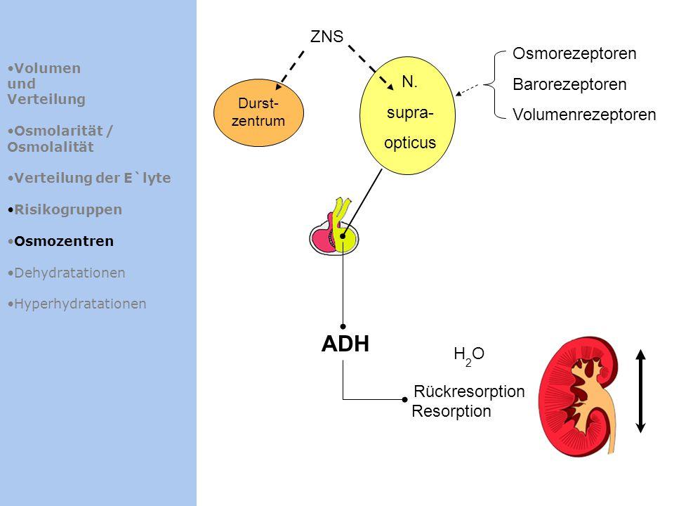 ADH ZNS Osmorezeptoren Barorezeptoren Volumenrezeptoren N. supra-