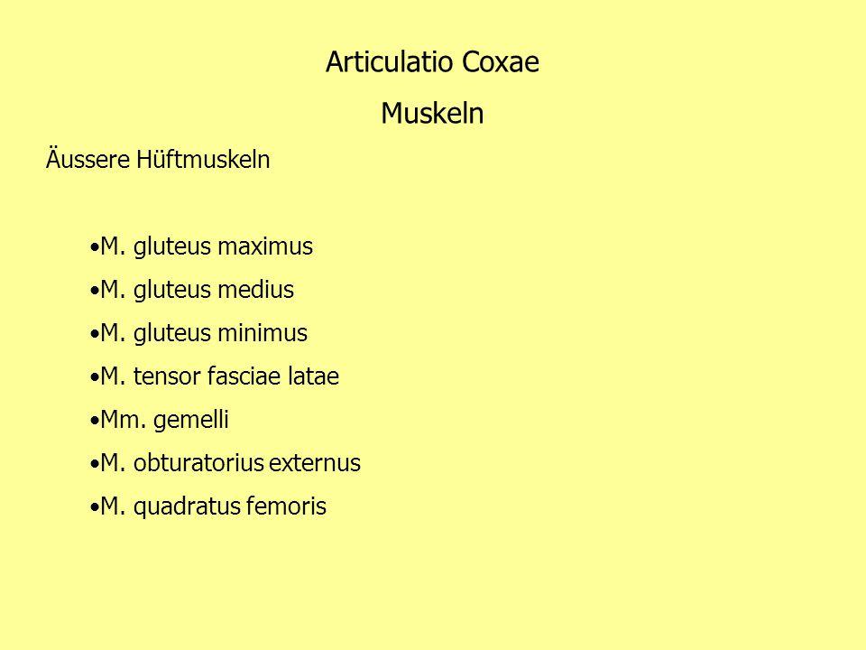 Articulatio Coxae Muskeln Äussere Hüftmuskeln M. gluteus maximus
