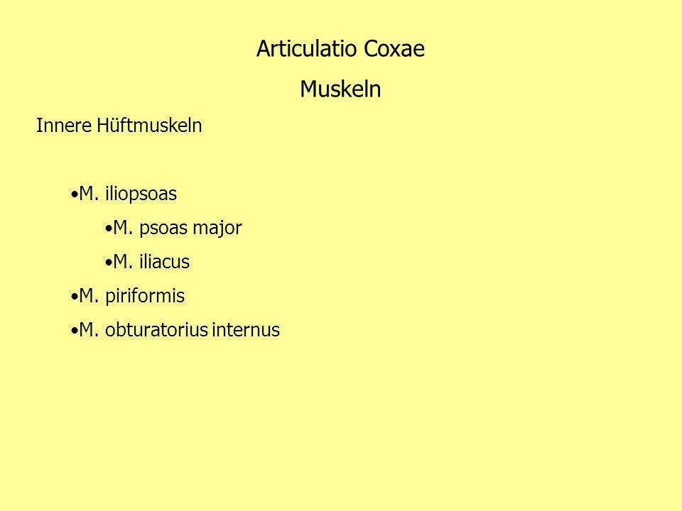 Articulatio Coxae Muskeln Innere Hüftmuskeln M. iliopsoas