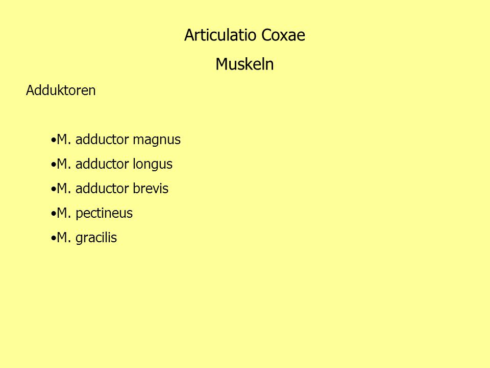 Articulatio Coxae Muskeln Adduktoren M. adductor magnus