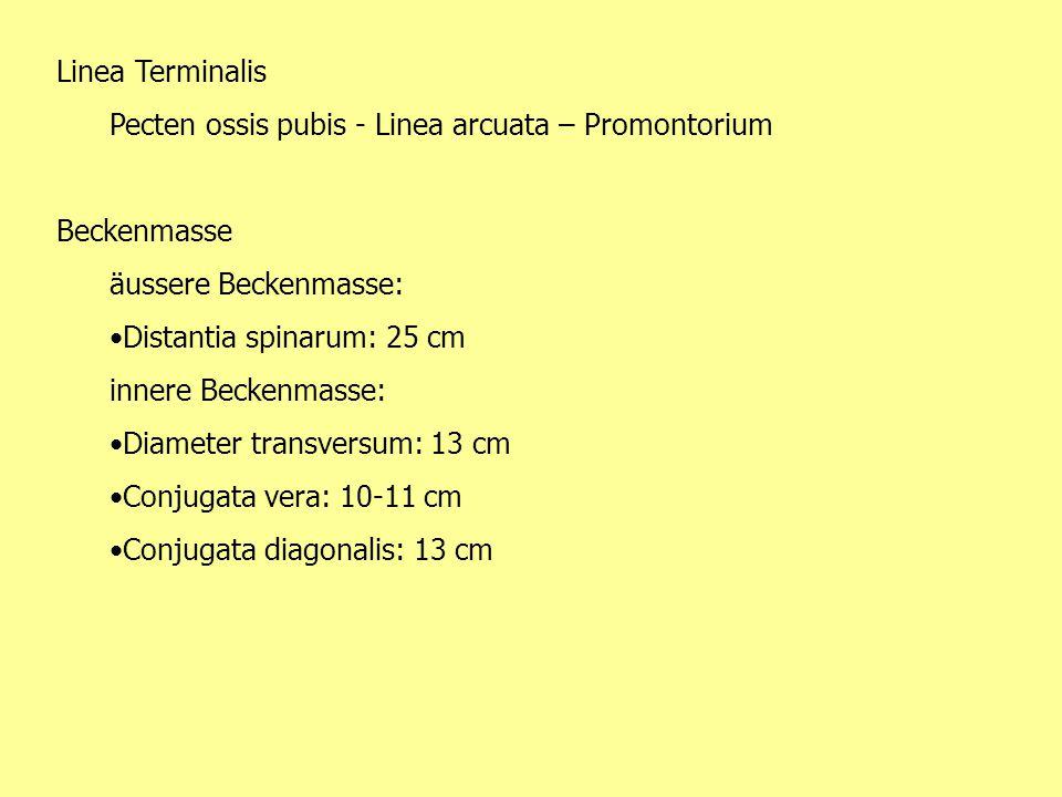Linea Terminalis Pecten ossis pubis - Linea arcuata – Promontorium. Beckenmasse. äussere Beckenmasse: