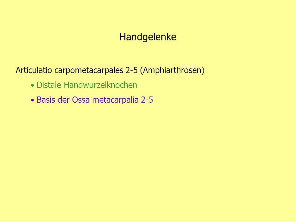 Handgelenke Articulatio carpometacarpales 2-5 (Amphiarthrosen)