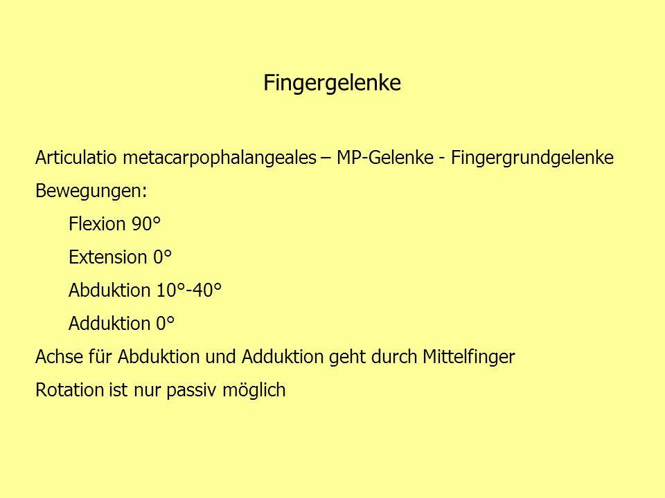 Fingergelenke Articulatio metacarpophalangeales – MP-Gelenke - Fingergrundgelenke. Bewegungen: Flexion 90°