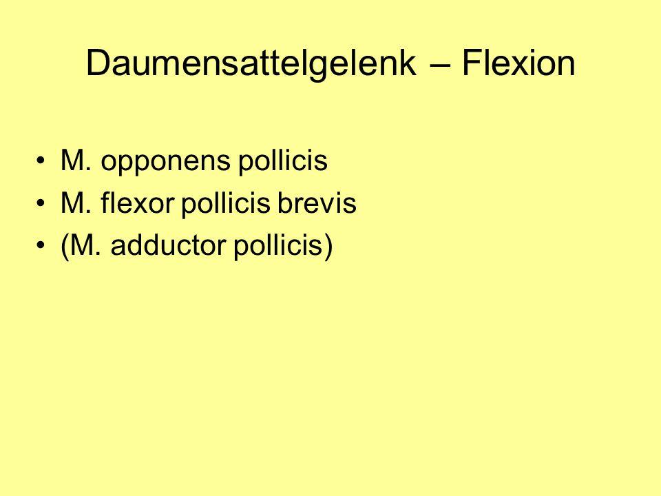 Daumensattelgelenk – Flexion