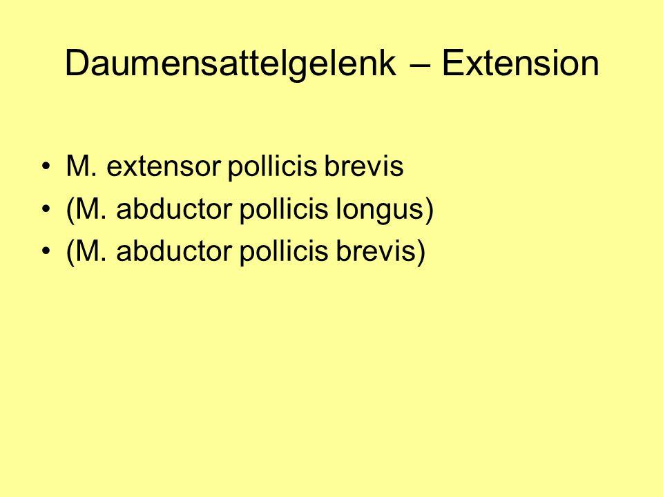 Daumensattelgelenk – Extension