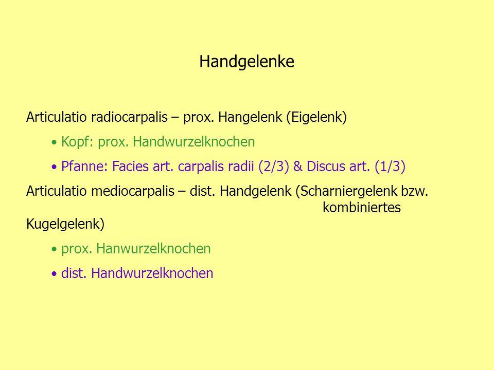 Handgelenke Articulatio radiocarpalis – prox. Hangelenk (Eigelenk)