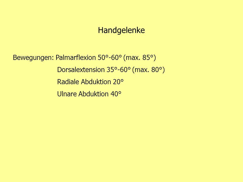 Handgelenke Bewegungen: Palmarflexion 50°-60° (max. 85°)