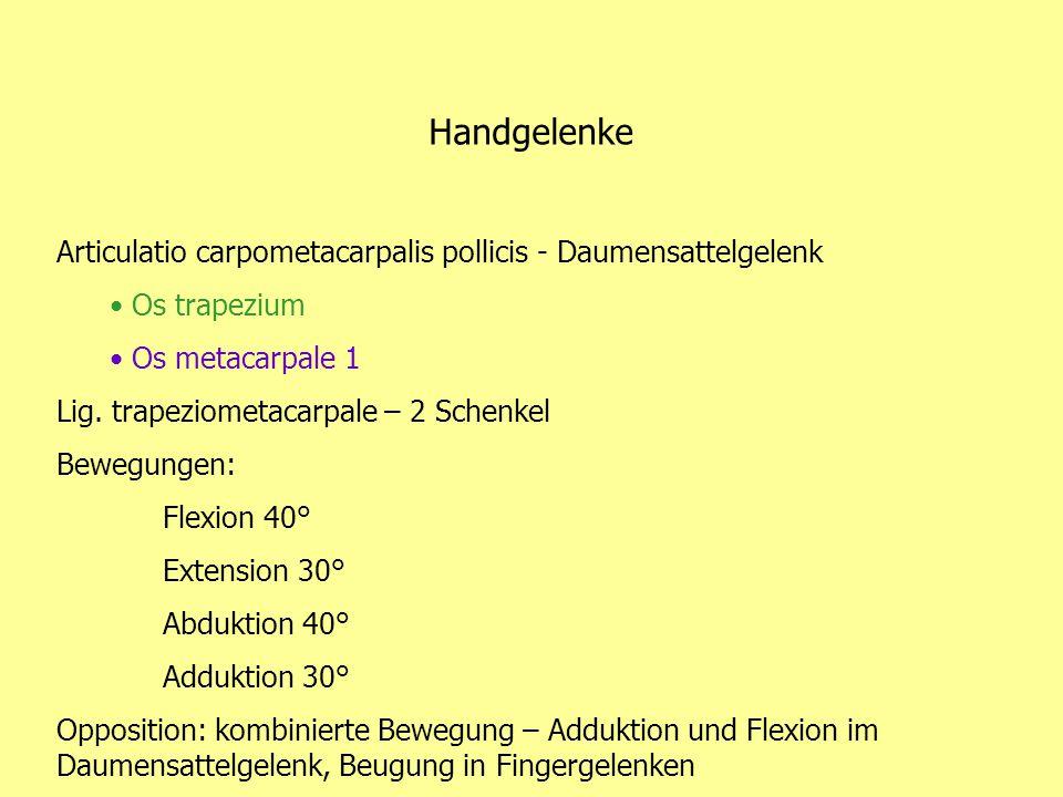 Handgelenke Articulatio carpometacarpalis pollicis - Daumensattelgelenk. Os trapezium. Os metacarpale 1.