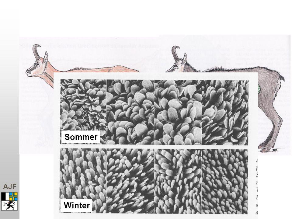 Sommer Winter