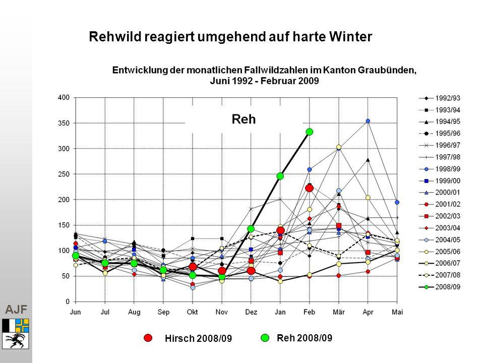 Rehwild reagiert umgehend auf harte Winter