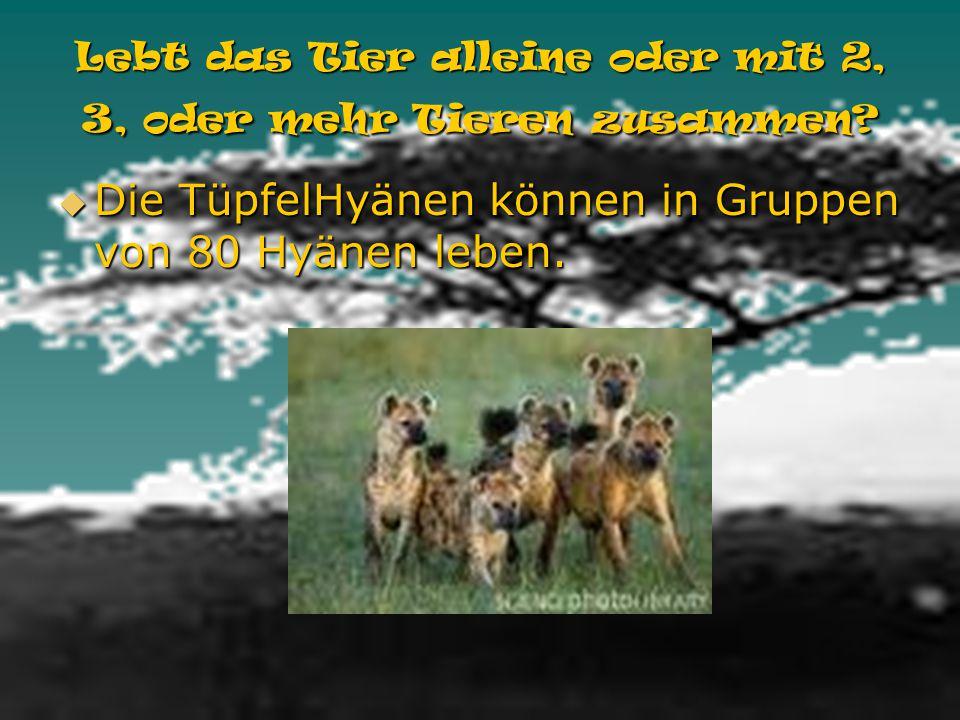 Lebt das Tier alleine oder mit 2, 3, oder mehr Tieren zusammen