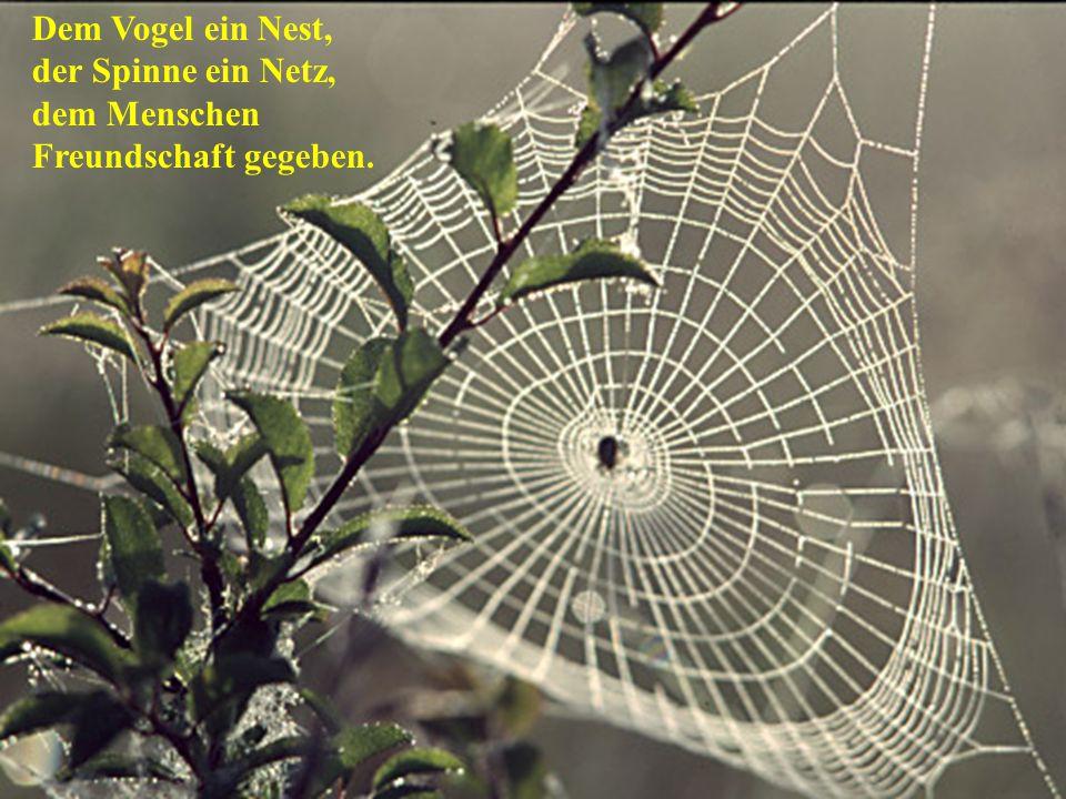 Dem Vogel ein Nest, der Spinne ein Netz, dem Menschen Freundschaft gegeben.