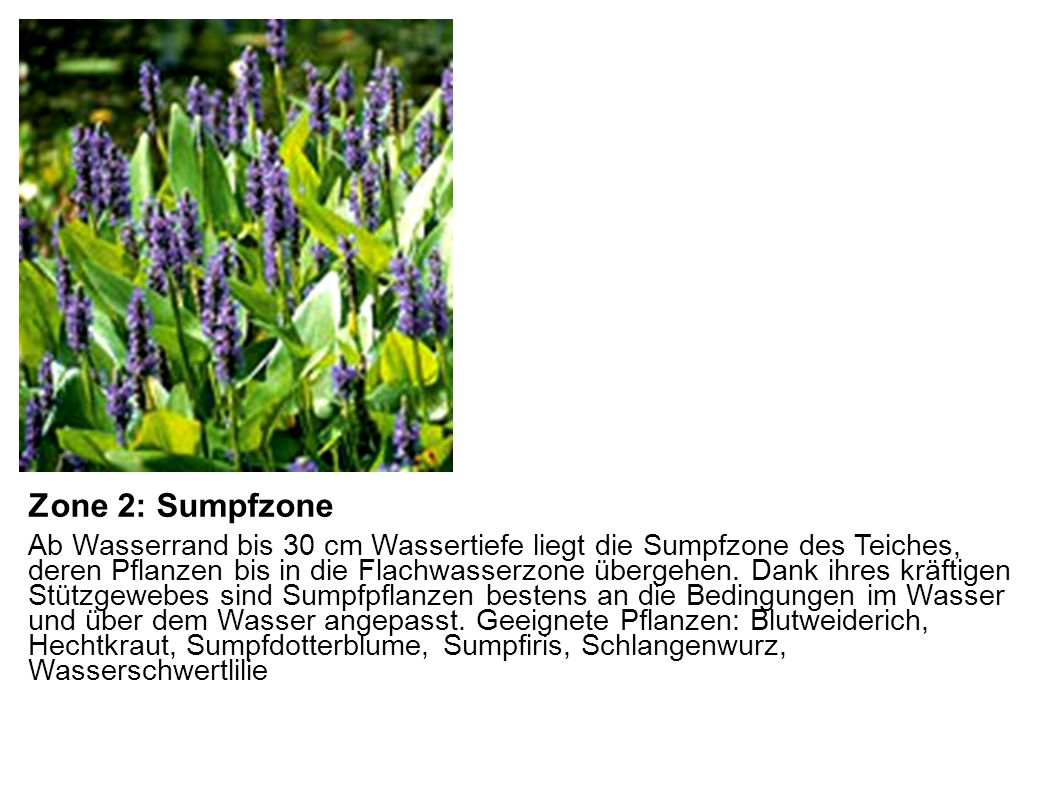 Zone 2: Sumpfzone