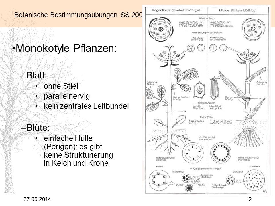 Monokotyle Pflanzen: Blatt: Blüte: ohne Stiel parallelnervig