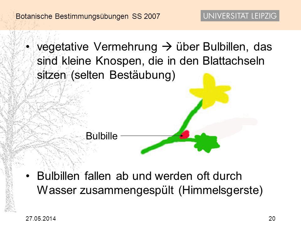vegetative Vermehrung  über Bulbillen, das sind kleine Knospen, die in den Blattachseln sitzen (selten Bestäubung)