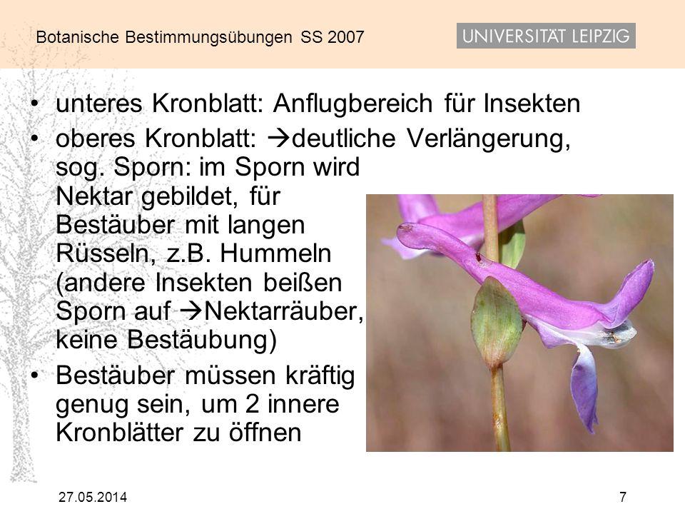 unteres Kronblatt: Anflugbereich für Insekten