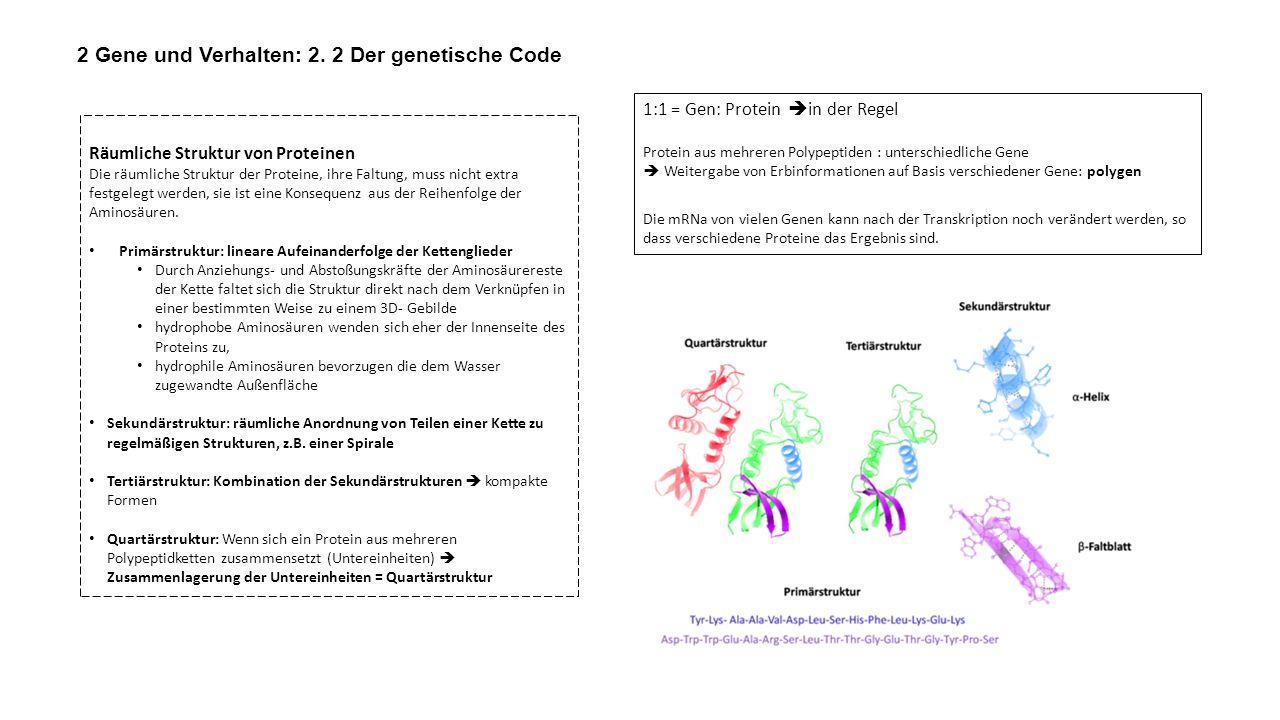 2 Gene und Verhalten: 2. 2 Der genetische Code