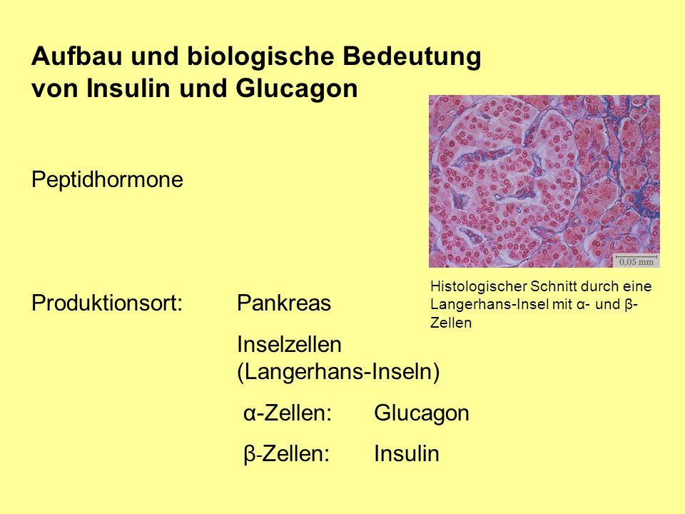 Aufbau und biologische Bedeutung von Insulin und Glucagon