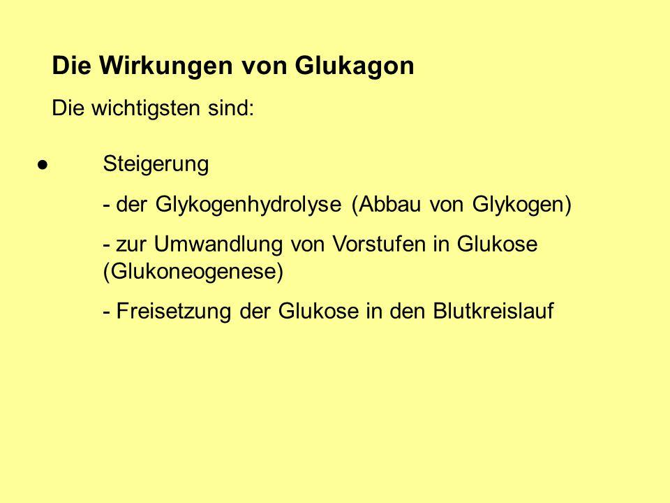 Die Wirkungen von Glukagon