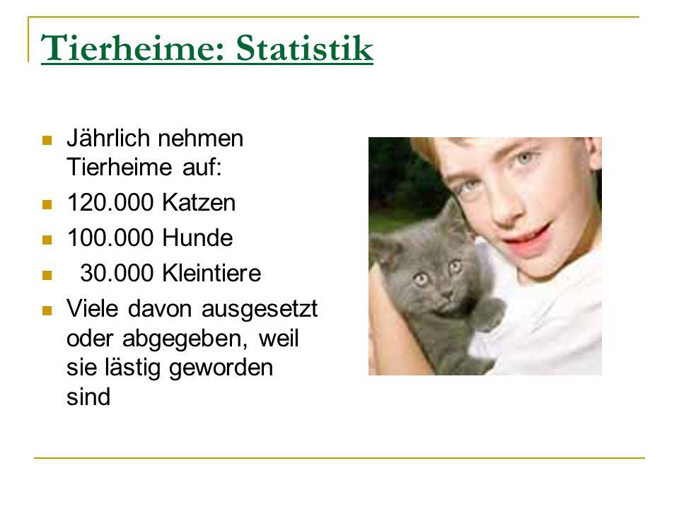 Tierheime: Statistik Jährlich nehmen Tierheime auf: 120.000 Katzen