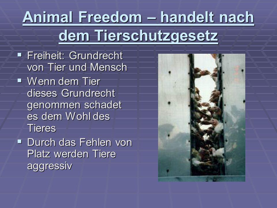 Animal Freedom – handelt nach dem Tierschutzgesetz