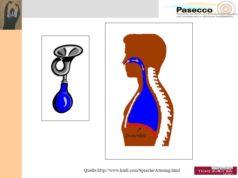 Zwerchfell Quelle:http://www.knill.com/Sprache/Atmung.html