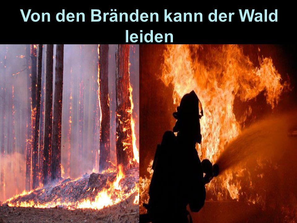 Von den Bränden kann der Wald leiden