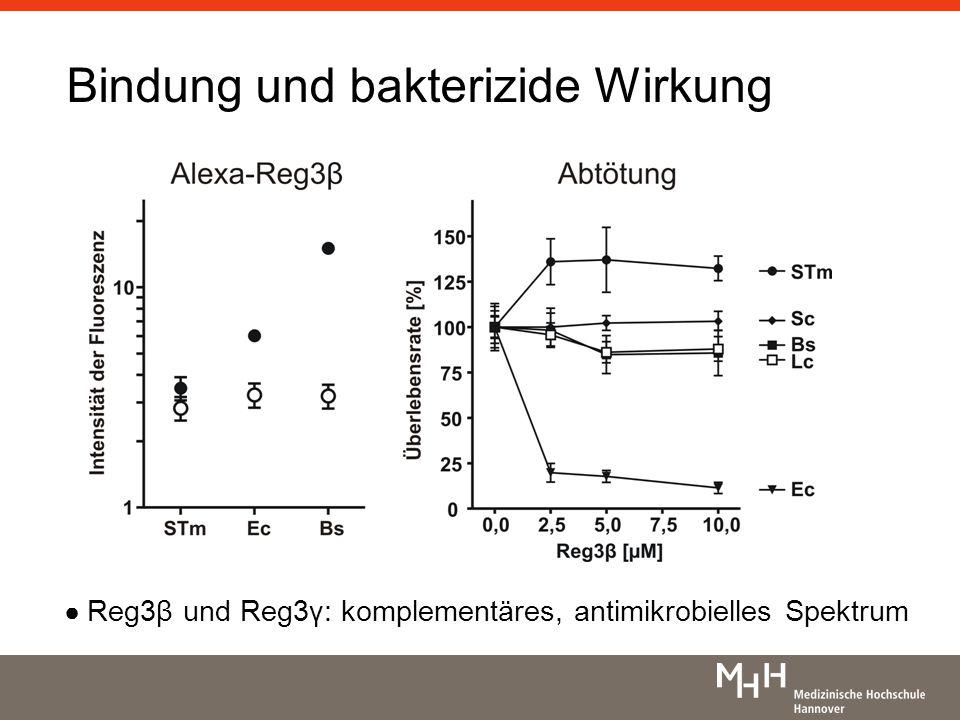 Bindung und bakterizide Wirkung