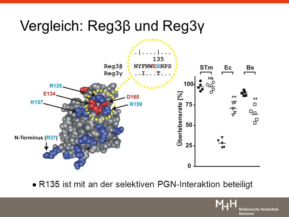 Vergleich: Reg3β und Reg3γ