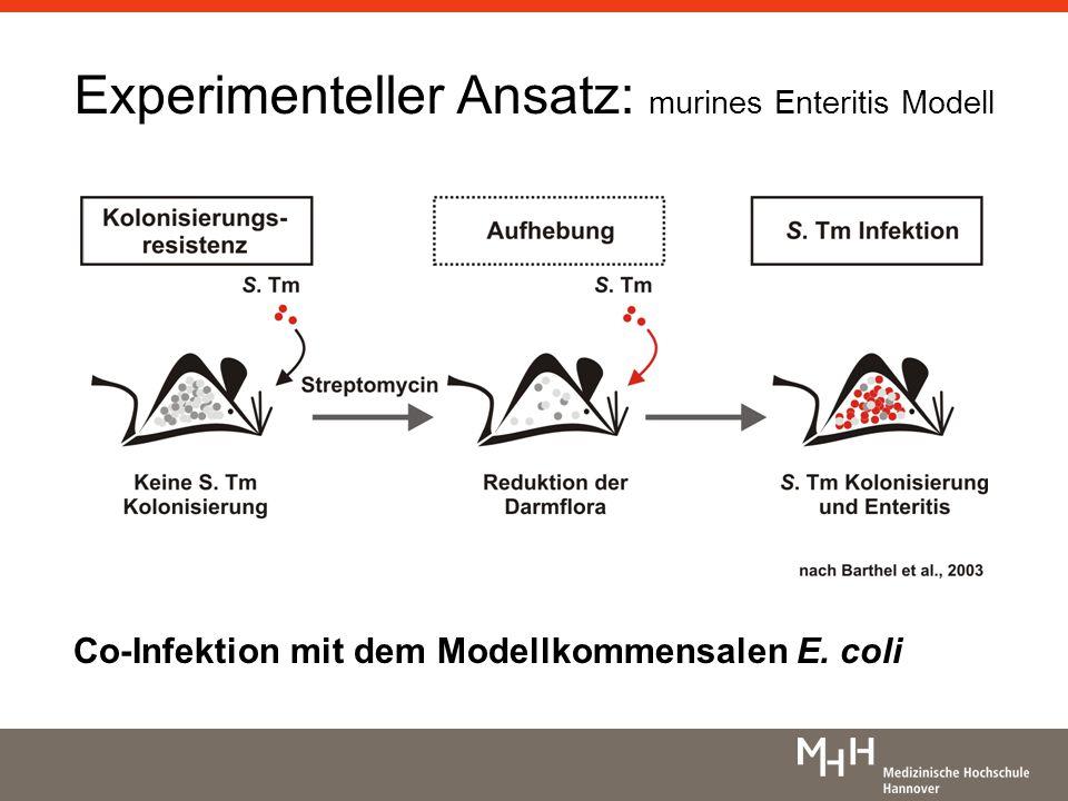 Experimenteller Ansatz: murines Enteritis Modell