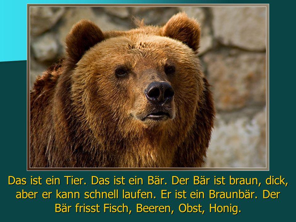 Das ist ein Tier. Das ist ein Bär