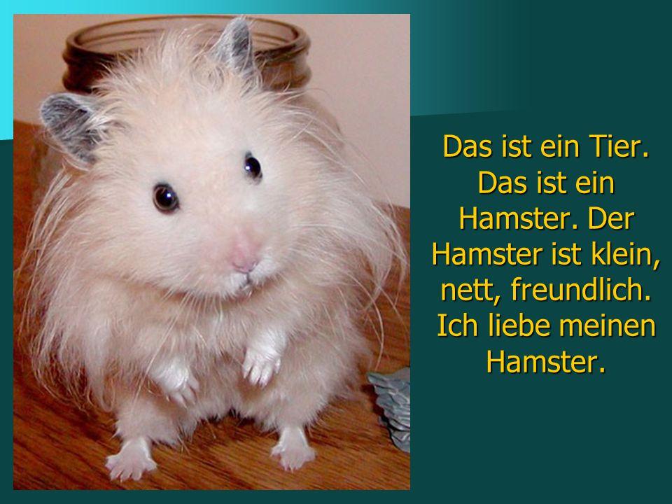 Das ist ein Tier. Das ist ein Hamster