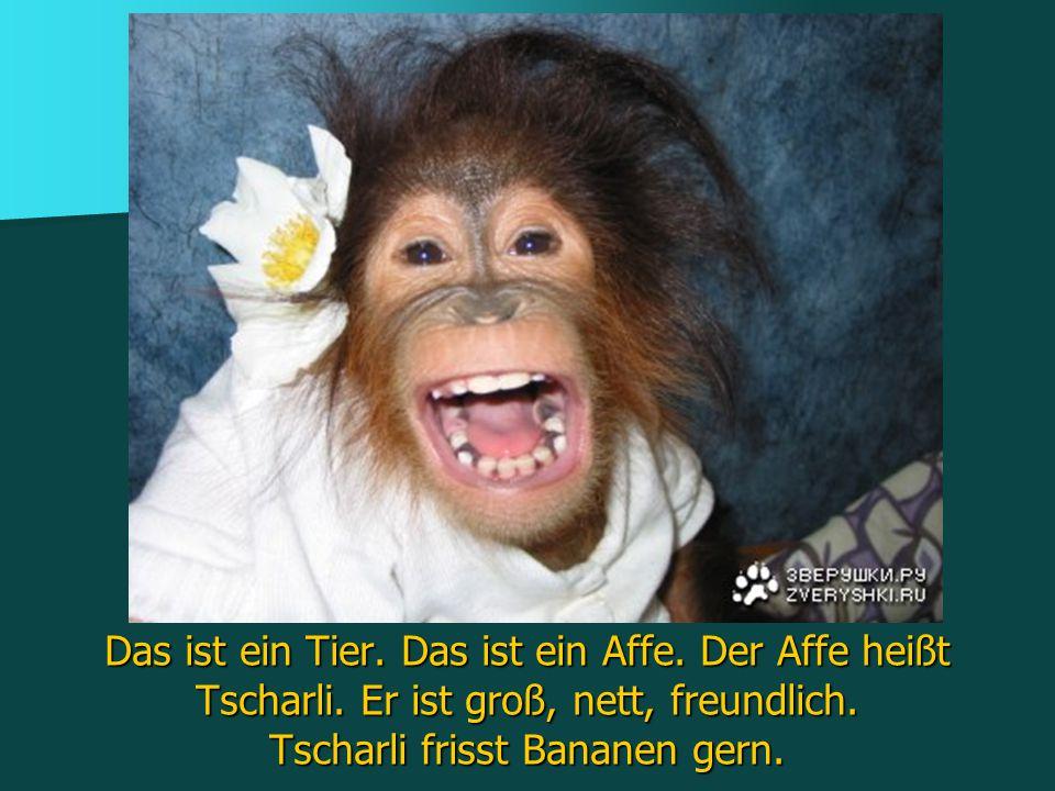 Das ist ein Tier. Das ist ein Affe. Der Affe heißt Tscharli