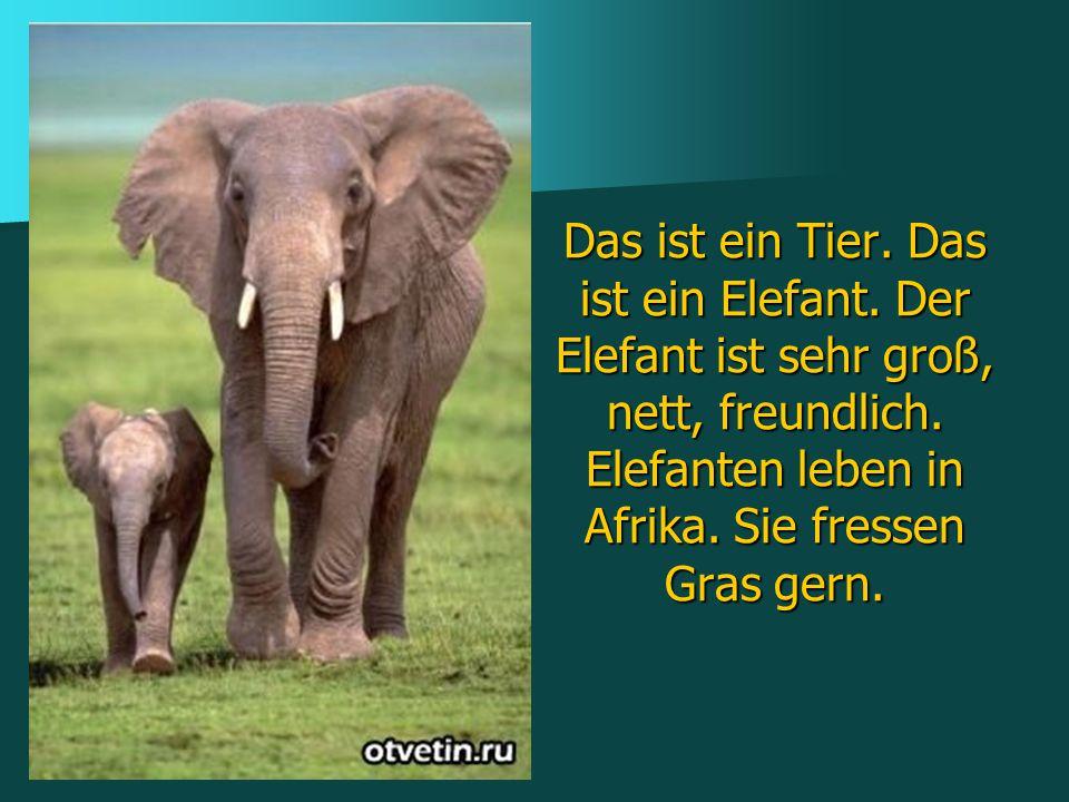 Das ist ein Tier. Das ist ein Elefant