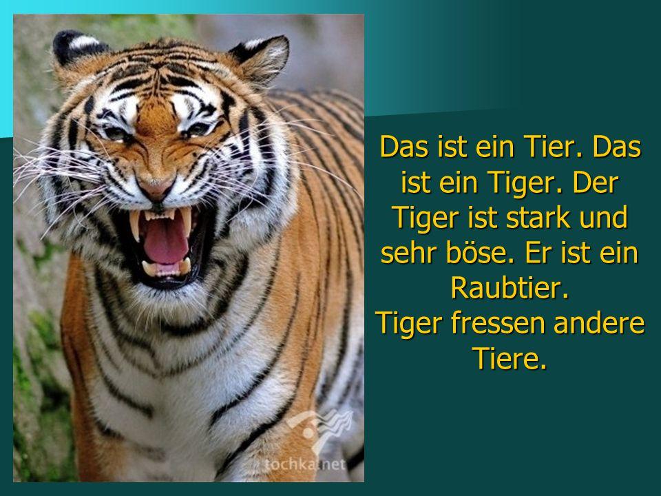 Das ist ein Tier. Das ist ein Tiger. Der Tiger ist stark und sehr böse