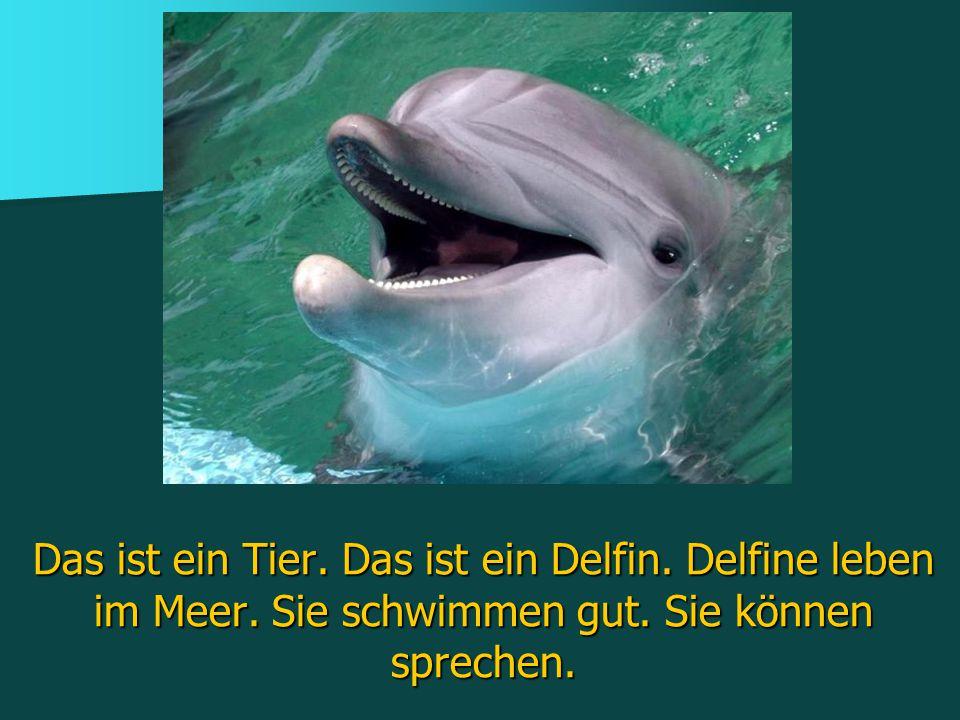 Das ist ein Tier. Das ist ein Delfin. Delfine leben im Meer