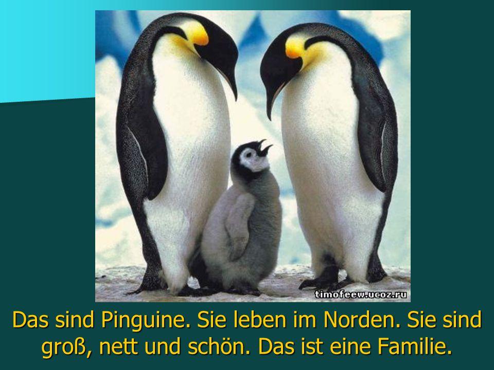 Das sind Pinguine. Sie leben im Norden. Sie sind groß, nett und schön