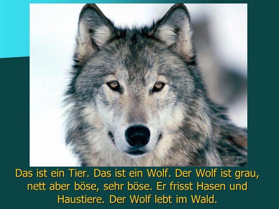 Das ist ein Tier. Das ist ein Wolf