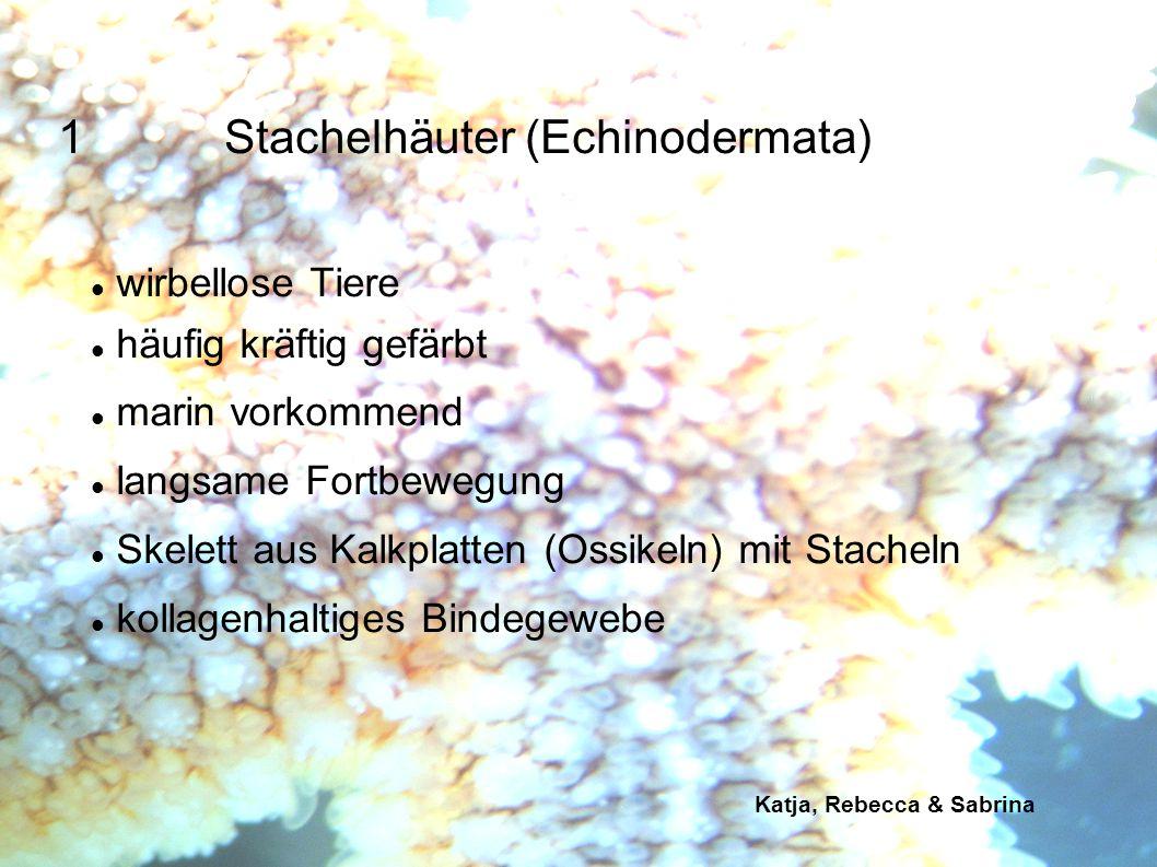 1 Stachelhäuter (Echinodermata)