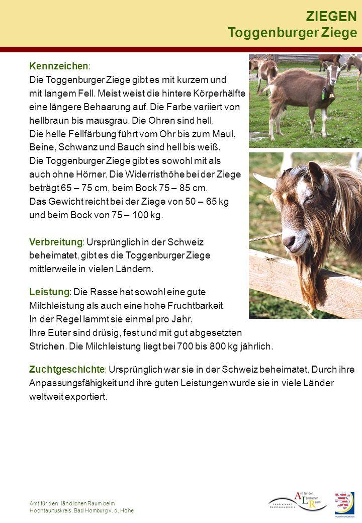 ZIEGEN Toggenburger Ziege Kennzeichen: