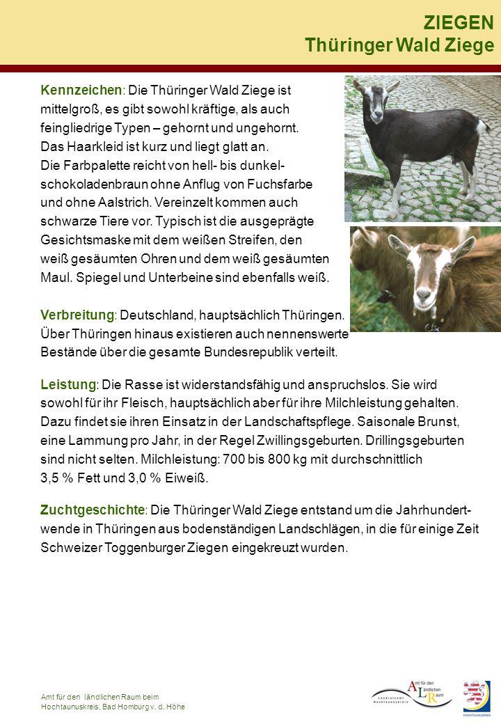 ZIEGEN Thüringer Wald Ziege Kennzeichen: Die Thüringer Wald Ziege ist