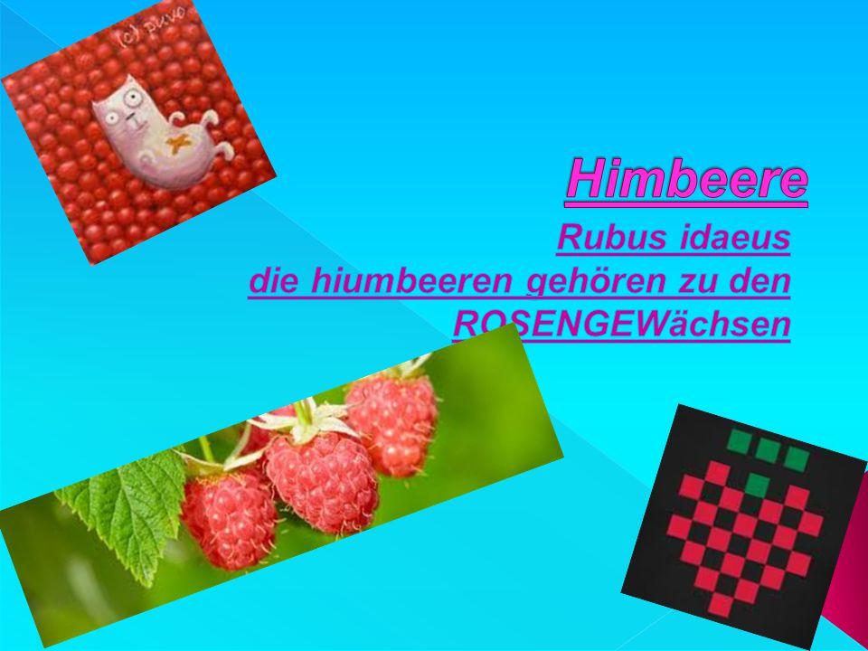 Rubus idaeus die hiumbeeren gehören zu den ROSENGEWächsen