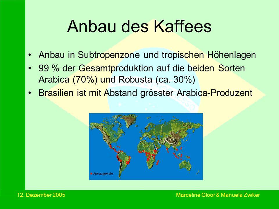 Anbau des Kaffees Anbau in Subtropenzone und tropischen Höhenlagen