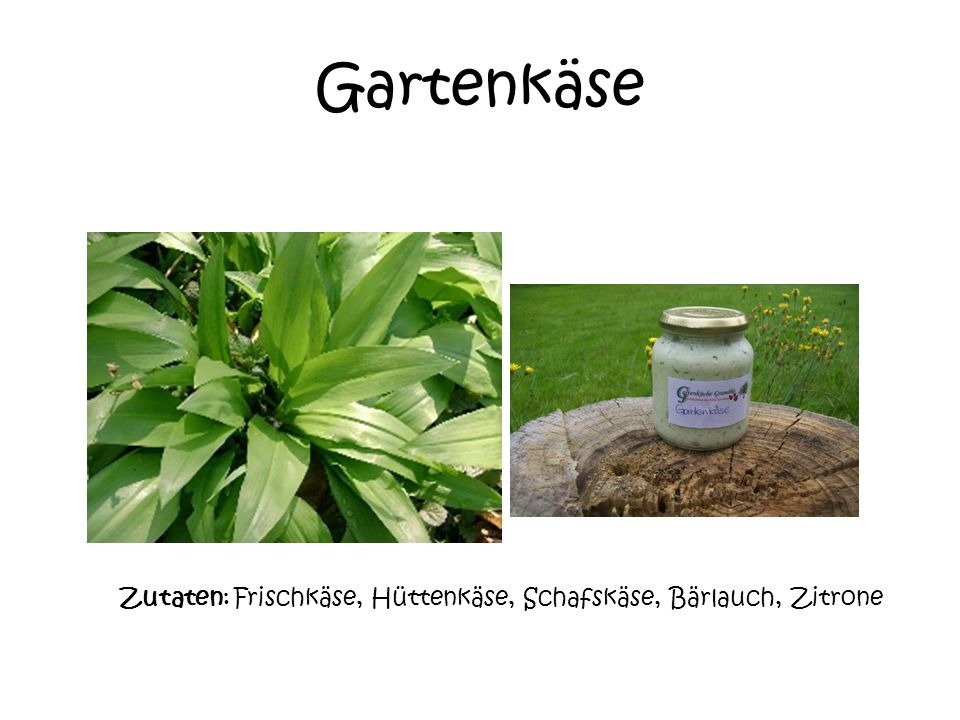 Gartenkäse Zutaten: Frischkäse, Hüttenkäse, Schafskäse, Bärlauch Zitrone.
