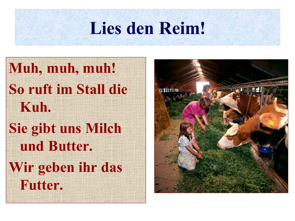 Lies den Reim! Muh, muh, muh! So ruft im Stall die Kuh.