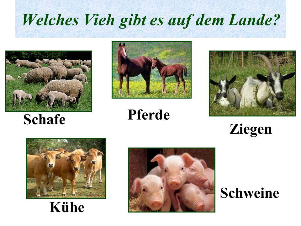 Welches Vieh gibt es auf dem Lande