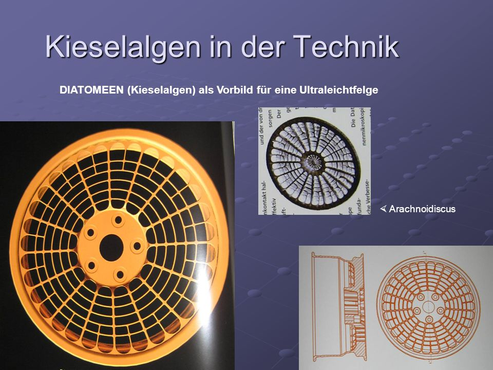Kieselalgen in der Technik
