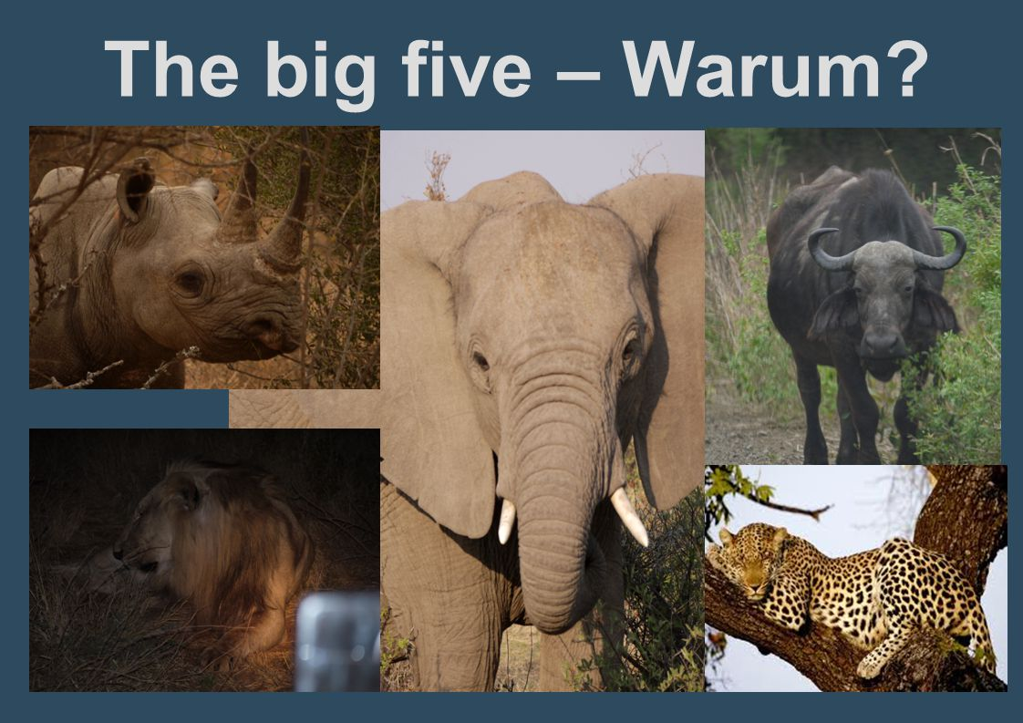 The big five – Warum